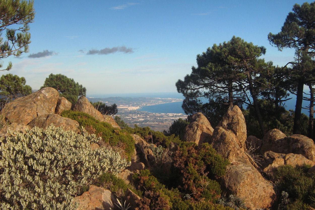 Vegetación de las cumbres de Sierra Bermeja